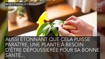 Plante : cette chose qu'il faut faire absolument pour entretenir ses végétaux