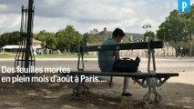 Des feuilles mortes à Paris... en plein mois d'août