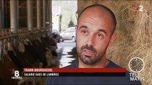 En Auvergne, la sécheresse affecte la production du Saint-Nectaire