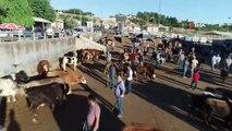 Diyarbakır'da kurbanlık hareketliliği başladı...Kurban pazarı havadan görüntülendi