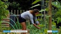 Normandie : deux maraîchers ont fait le choix de la permaculture