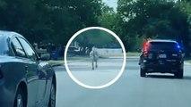 Texas : un zèbre en fuite poursuivi par la police