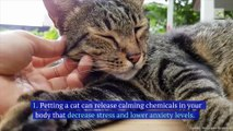 8 Health Benefits of Having a Cat (International Cat Day, August 8)