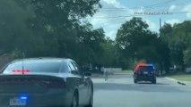 Course-poursuite entre la police texane et un zèbre qui s'est échappé