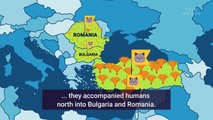 Animated map shows how cats spread across the world