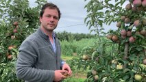 800 000 pommes jetées à la ferme Goffin