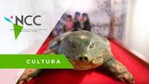 Tortugas de caparazón blando, el símbolo de la lucha vietnamita