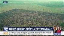 Surproduction, gaspillage, déforestation... Le GIEC alerte sur la nécessité de repenser notre agriculture et notre alimentation