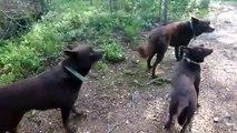 Ces chiens sont parfaitement immobiles... Incroyable