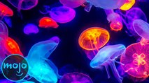 Top 10 Animals That Glow In The Dark
