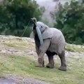 Essayez de ne pas sourire ! Une famille entière d'éléphants jouent ensemble !