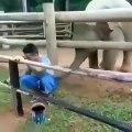 Quand un éléphant veut à tout prix s'amuser, voici ce que ça donne !