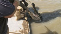 Swamp People: Hunting the Black Gold Gator