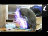 Emperor Palpatine's Cat battles toys - Star Wars Cat