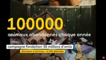 """Abandon d'animaux en France  : """"We are the champion"""""""