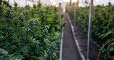 Cannabis : Le Luxembourg va devenir le premier pays européen à légaliser !