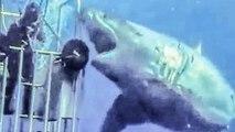 Caught on Tape 2017 - Largest Monster Submarine Sharks Ever Filmed, Abnormally Large Carcharodon