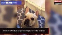 Un chien fait le buzz en protestant pour avoir des céréales (vidéo)