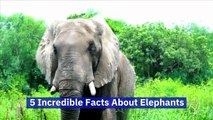 5 Incredible Facts About Elephants (World Elephant Day, August 12)
