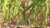 Sécheresse : des agriculteurs réclament de nouveaux barrages pour retenir l'eau