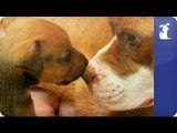 The Litter: Puppies - with Sharon Osbourne - Episode 1