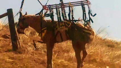 Horse Is Airlifted to Safety After Falling Down Bank