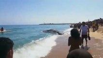 Una ballena varada impide el baño en Mataró