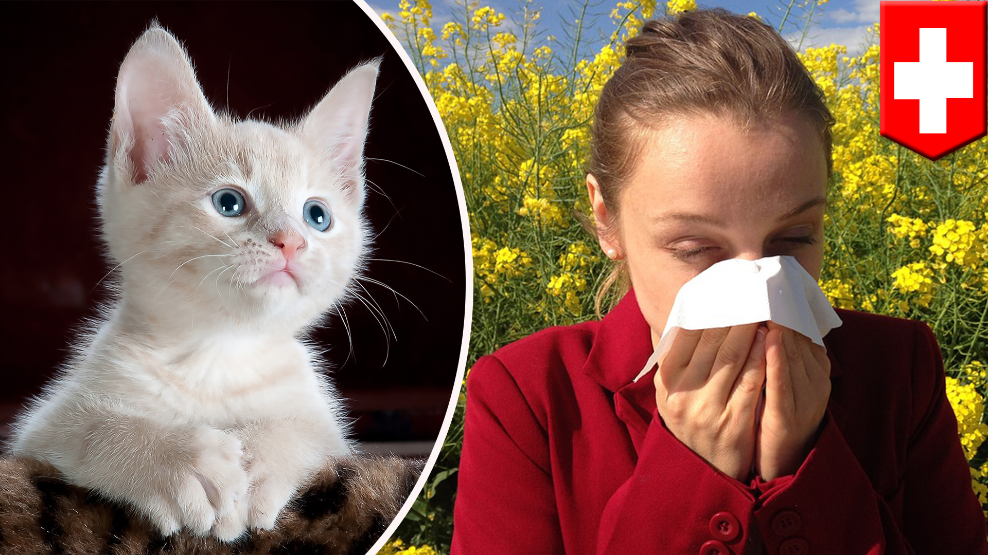 Scientists develop vaccine to help people with cat allergies
