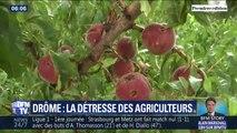 Drôme: les agriculteurs touchés par la grêle attendent toujours l'aide des autorités
