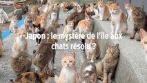 Japon : le mystère de l'île aux chats résolu ?