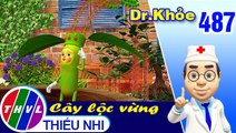 THVL   Dr. Khỏe - Tập 487: Hoa đậu biếc - Phần 2