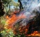 Burgazada yanıyor