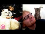 Who Posts More Cat Pictures Between Taylor Swift and Ed Sheeran?