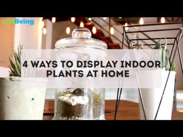 4 Ways to Display Indoor Plants at Home