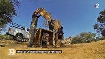 Namibie : l'ange-gardien des guépards