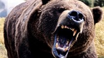 World's Most Deadliest Animals to Humans - Interesting Statistics