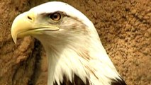 US weakens endangered species' protection for oil companies