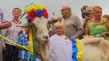 """Les chèvres ukrainiennes se font """"bêle"""" pour le Koza Fest"""