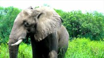 5 Incredible Facts About Elephants
