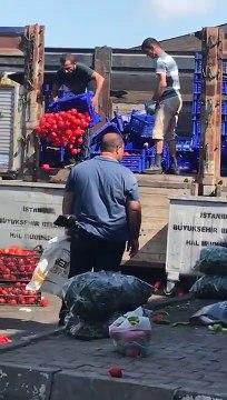 Domatesler halka satılmak yerine çöpe atılıyor