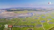 Picardie: la Baie de Somme, un trésor menacé
