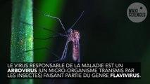 Qu'est ce que la dengue ?