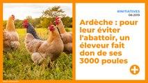 Pour leur éviter l'abattoir, un éleveur fait don de ses 3000 poules