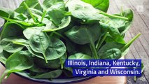 Baby Spinach Recall Issued by Dole in the US