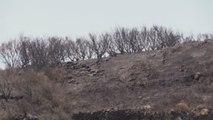 Se prevé que los dos incendios de Gran Canaria queden controlados mañana