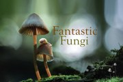 Fantastic Fungi Trailer (2019)
