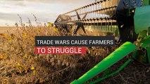 Trade Wars Cause Farmers To Struggle