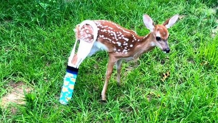 Fawn Gets Colorful Cast After Breaking Leg