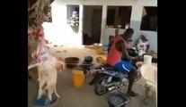 """""""Fess Kharr Tabaski ou maltraitance : la vidéo qui fâche les internautes"""