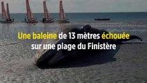 Une baleine de 13 mètres échouée sur une plage du Finistère